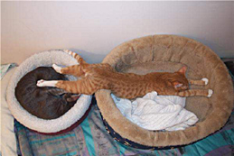 internet_tabby_across_beds